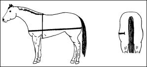 TAMU-Estimating Body Weight